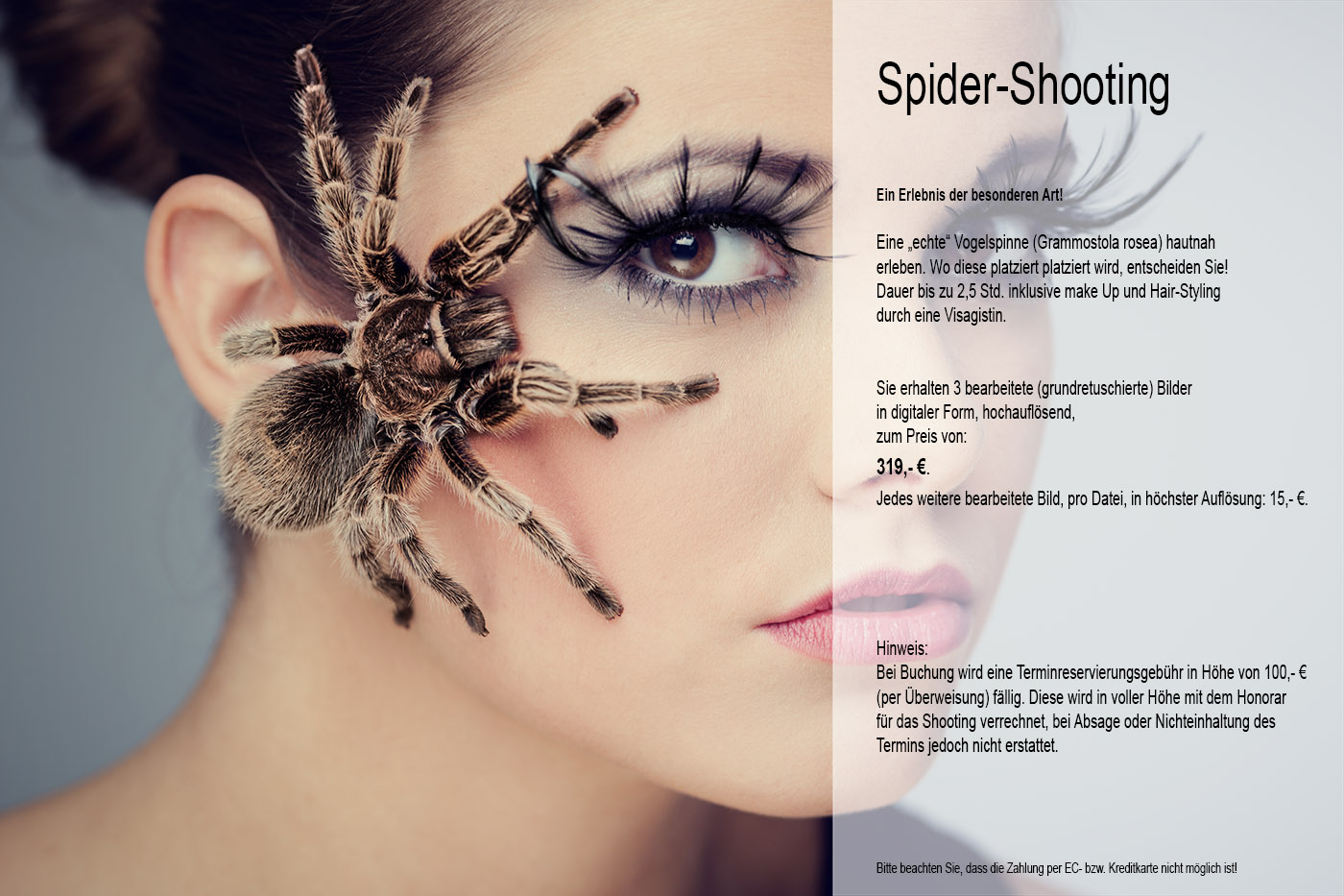 vogelspinnen-shooting-angebot